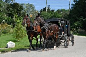 2011 Horse & Buggy Rides